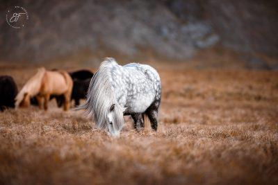 04 Hornhestar große Herde-6
