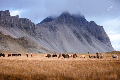 04 Hornhestar große Herde-7