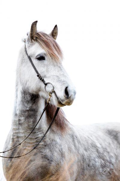 09 Eldhestar Pferde im Portrait-2
