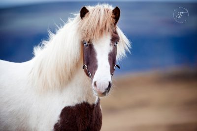 13 Eldhestar Teilnehmer mit Pferden im Portrait-2