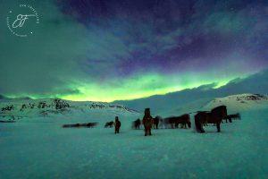 25 – Pferde im Nordlicht_WEB