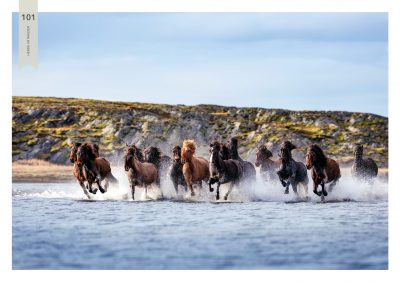 Pferde-101