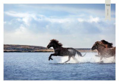Pferde-102