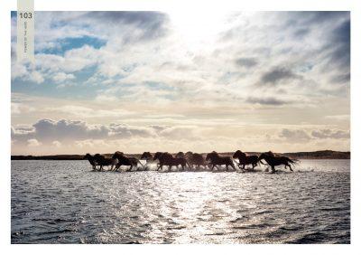 Pferde-103