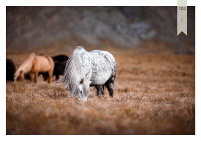 Pferde-104