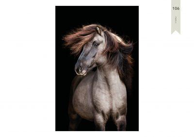 Pferde-106