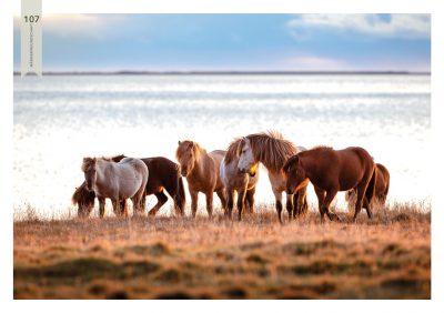 Pferde-107