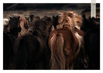 Pferde-108