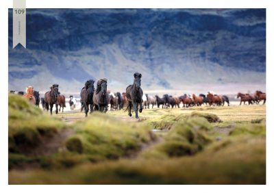 Pferde-109