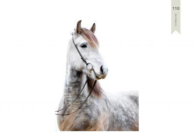 Pferde-110