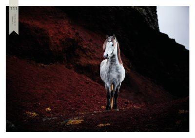 Pferde-111