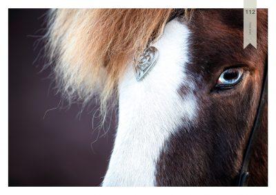 Pferde-112