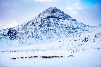 05 Herde am Berg-1