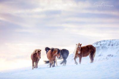 05 Herde am Berg-3