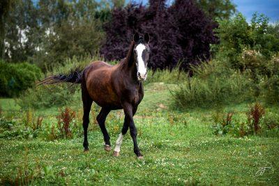 Filmtier2020 Pferde-3