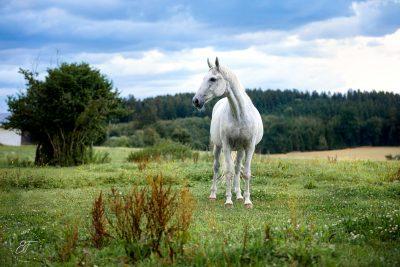 Filmtier2020 Pferde-4
