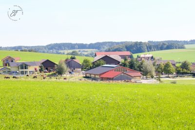 Burghauser Archiv-2