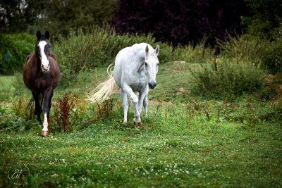 Filmtier2020 Pferde-2